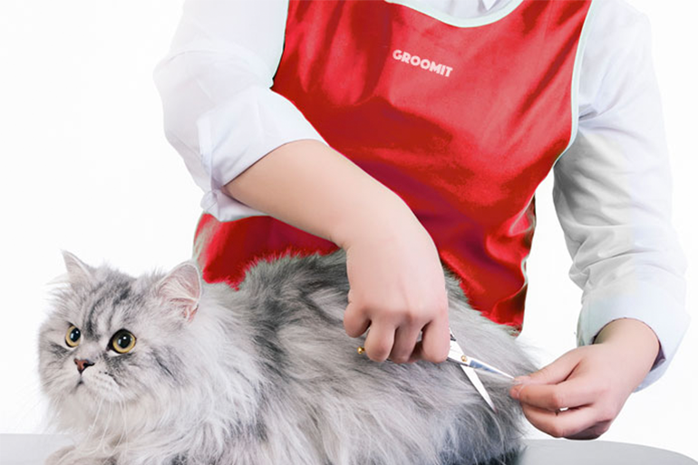 Professional Cat Grooming: What You Need to Know! | Groomit Blog