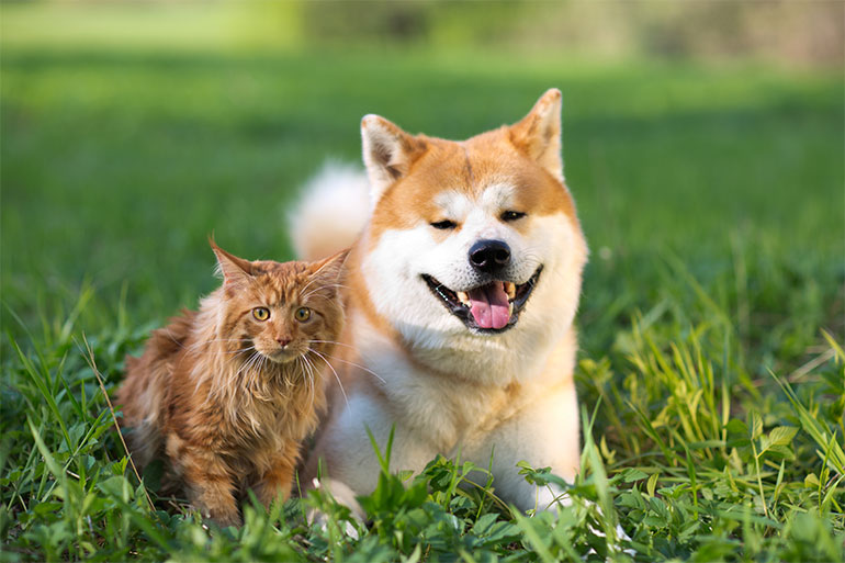 pet grooming near me