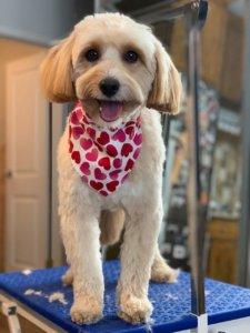Groomit - dog groomed
