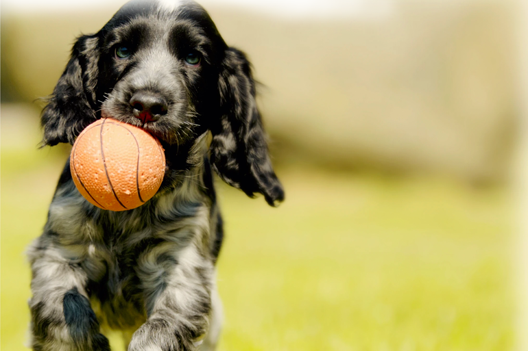 A dog with a ball in his mouth