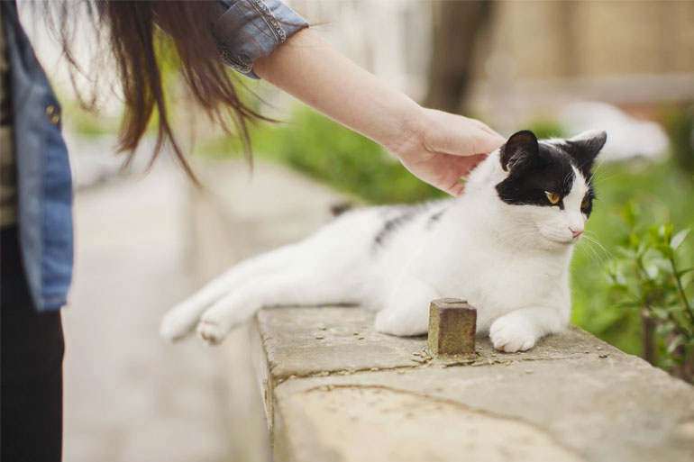 Person touching a cat