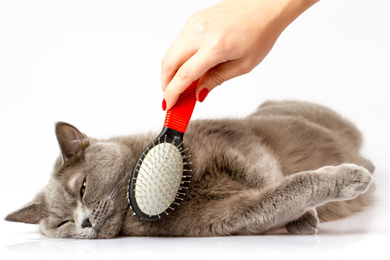 A cat being brushed