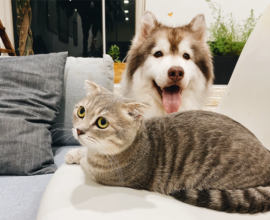 Dog and cat sitting on a sofa