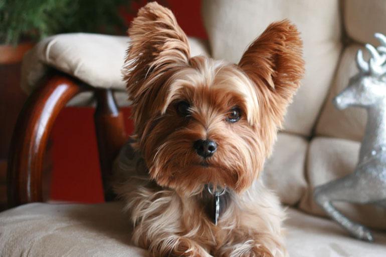 Terrier photo