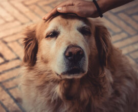 old-dog-photo