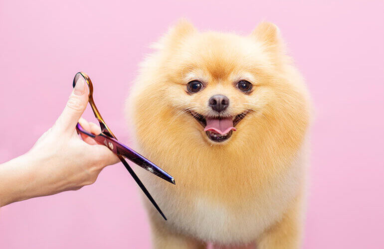dog-haircut